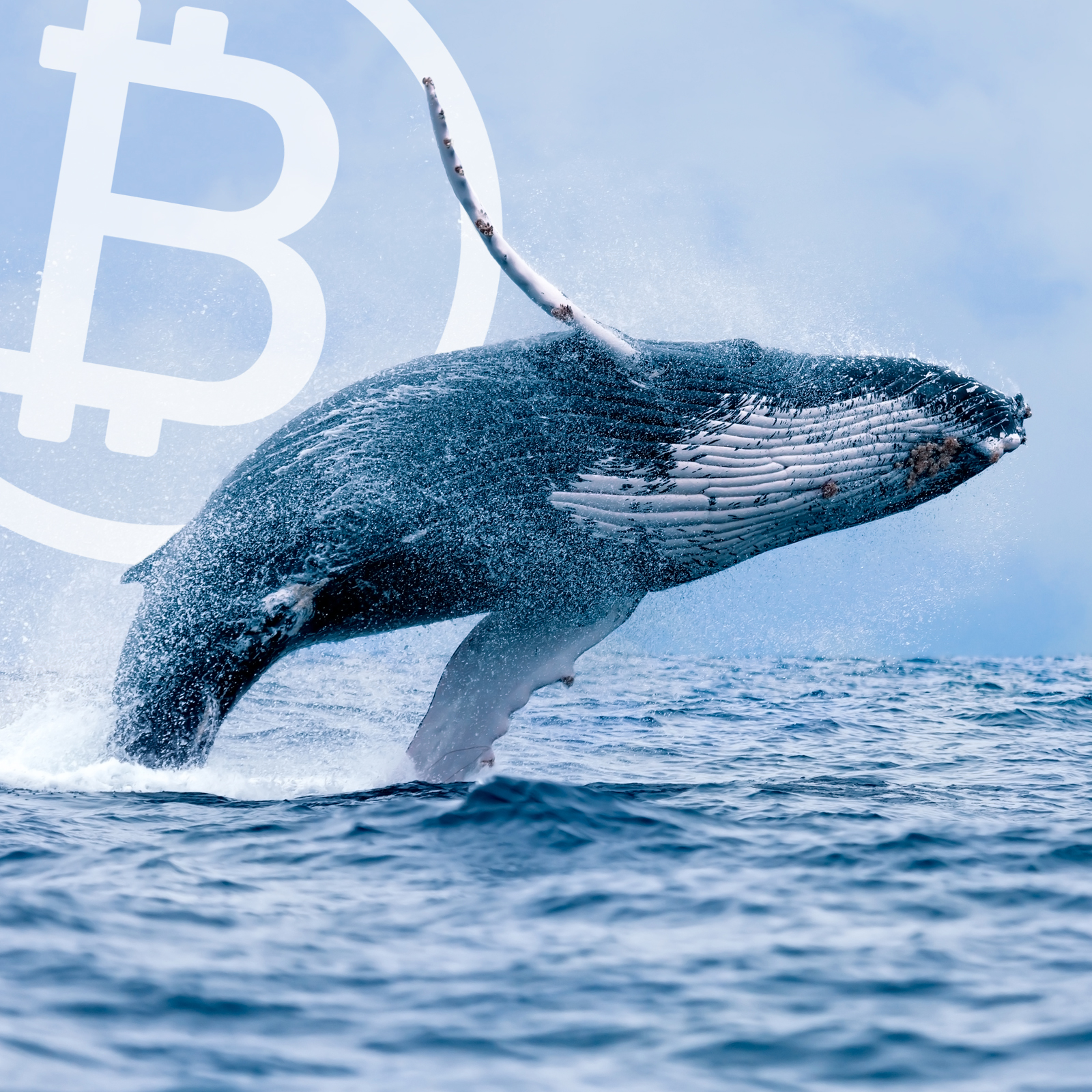 Bitcoin Whales and the Rise of Crypto-Fueled OTC Desks in 2018